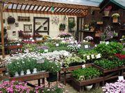 ナンベラ素敵菜園/ガーデニング、園芸