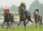 2011競馬予想と自慢大会
