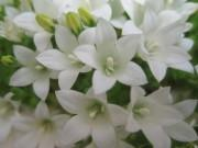 お花達に癒されて