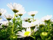 お散歩の花