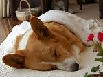 犬の介護のひとこま*