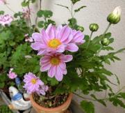植物・花♪