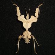 姫山甚五の昆虫細工