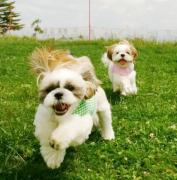 愛犬と一緒にキャンピングカーライフ