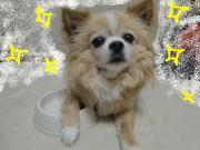 広島・岡山・山口♪犬だい好き♪