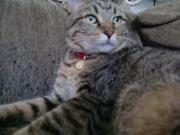 広島・岡山・山口♪猫だい好き♪