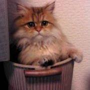 ペット動物赤ちゃん共有トラコミュ(犬/猫)