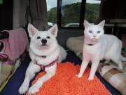 ペットと車中泊旅