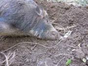 猪狩り日誌