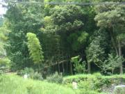 田舎生活と自然の風景