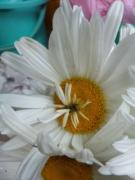 今日の切り花は、なぁに?