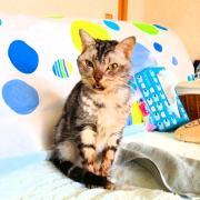 猫の舌の扁平上皮癌