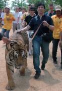 正しい虎とお散歩の仕方