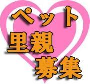 東京・神奈川中心『犬猫里親募集情報』