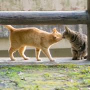 鹿児島の猫写真