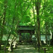 京都日和 〜 Kyoto Biyori 〜