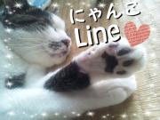 にゃんこLine