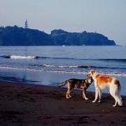 湘南で犬と