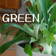 植物・グリーンのある暮らし