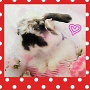 LOVE ♥ LOVE ♥ アメファジ