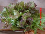 葉物野菜を育てよう!