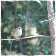 女子カメラ的*野鳥写真
