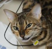 猫笑い写真ブログ