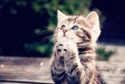 カナダでの海外での生活~愛猫との日常