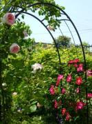 ベンチを囲む薔薇とチワワ