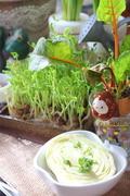 リボベジ 再生野菜を楽しんでいる方!