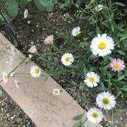 小花・小輪の花