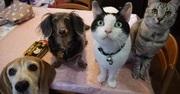 愛犬と愛猫との 私の人生メモリー