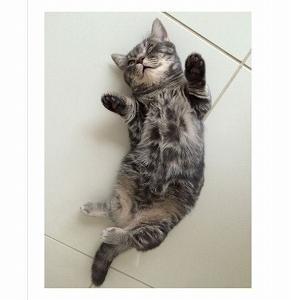 猫との暮ら ~時々お片付け+防災備蓄収納~
