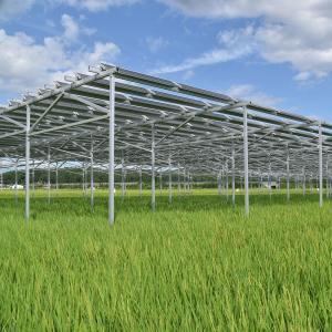 営農型太陽光発電(ソーラーシェアリング)
