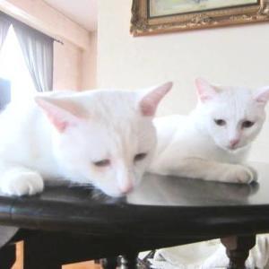 猫とセルフリフォーム