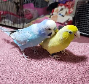 小鳥と犬好き飼い主日記