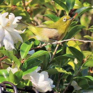 里山の野鳥観察写真