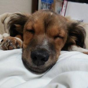 犬、猫との激動な毎日