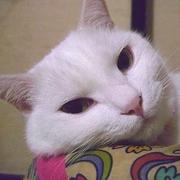 何が何でも白猫が好き☆