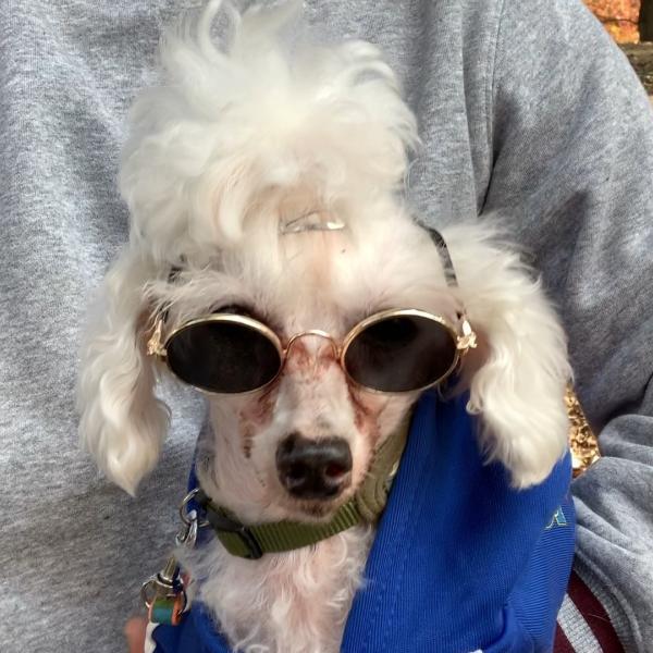 犬との暮らしの豆知識