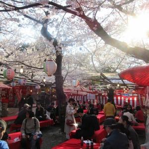 京都で桜を観ました