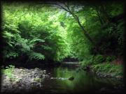 ルアーによる渓流釣り