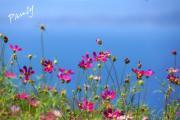 それぞれの・・お花見〜♪