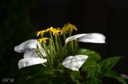 花の写心(写真)♪