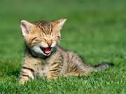 九死に一生を得たスピリチュアルな猫