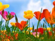 花の教室便り