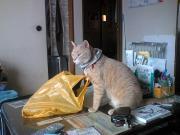 猫から学ぶログ