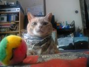 ※注意・猫で遊ぶ。