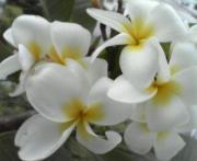 ハワイ / Hawaii