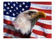 アメリカ政治&日米・大西洋同盟